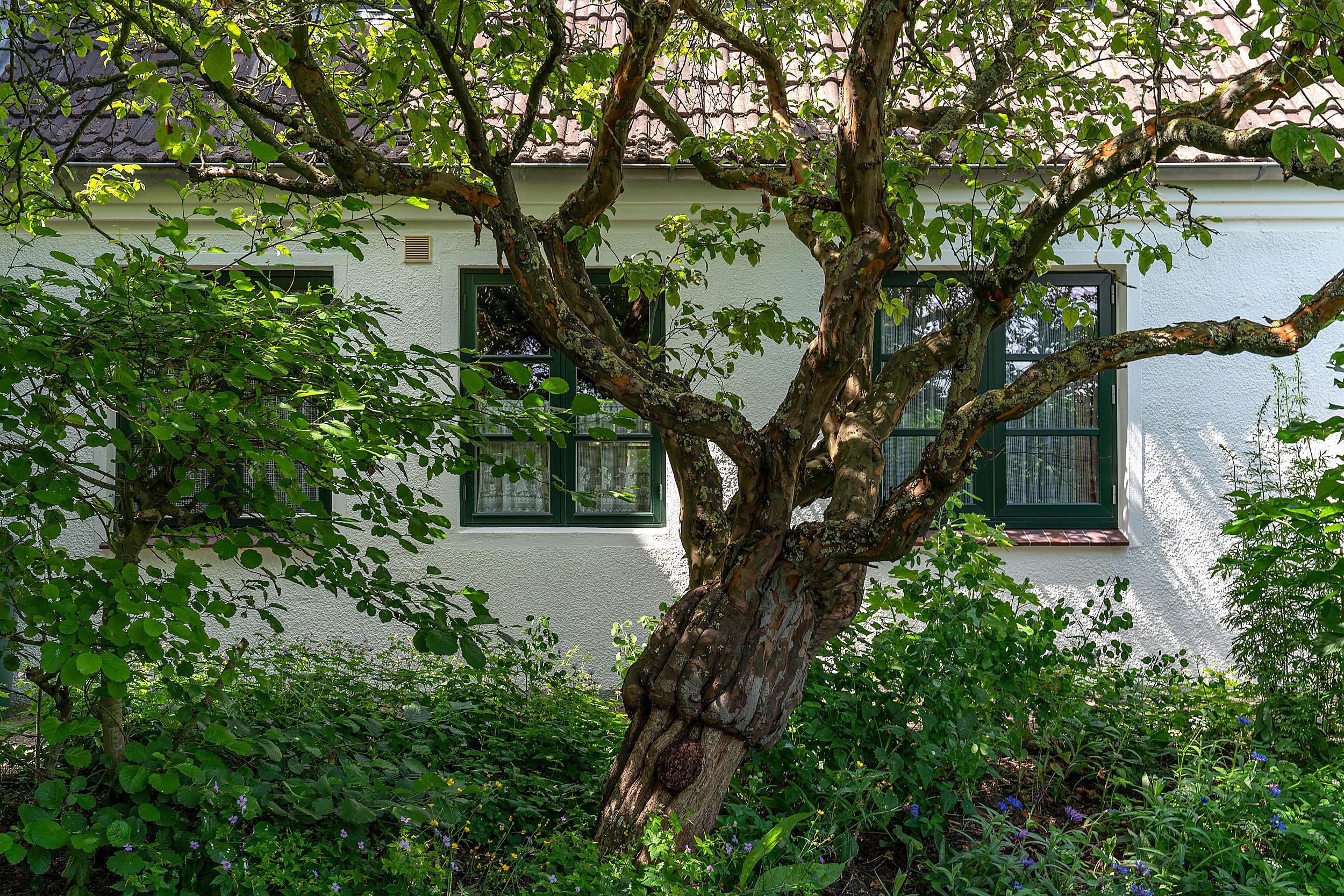 Haus Vogelkiek - Haus